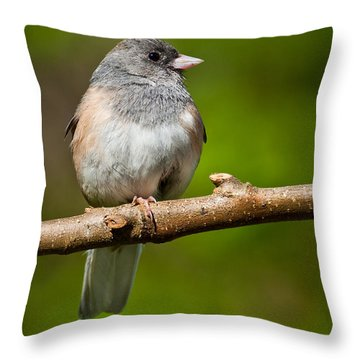 Dark Eyed Junco Perched On A Branch Throw Pillow