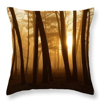 Dark Forest Throw Pillow by Terri Gostola
