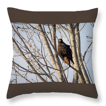 Throw Pillow featuring the photograph Dark-morph Western Red-tailed Hawks by Ricky L Jones