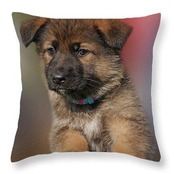 Darling Puppy Throw Pillow