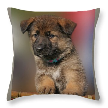Darling Puppy Throw Pillow by Sandy Keeton