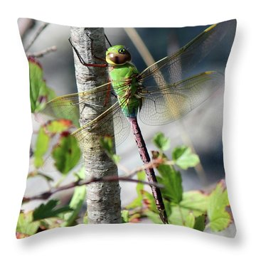 Darner Throw Pillow