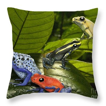 Dart-poison Frogs - Poison-dart Frogs Dendrobatidae - Baumsteiger Frosch - Pijlgifkikkers Throw Pillow by Urft Valley Art