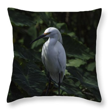 Date Night Throw Pillow by Rob Wilson