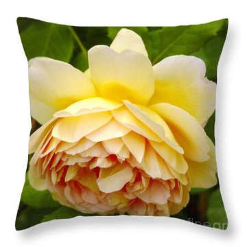 David Austin Rose Golden Celebration 2 Throw Pillow