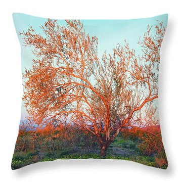 Throw Pillow featuring the photograph Dawn's First Light At Joshua Tree National Park by Ram Vasudev