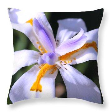 Day Lily 3 Throw Pillow by M Diane Bonaparte