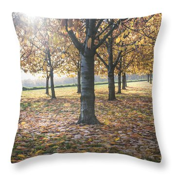 Day Of Colours Throw Pillow by Bruno Santoro