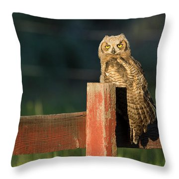 Day Walker Throw Pillow