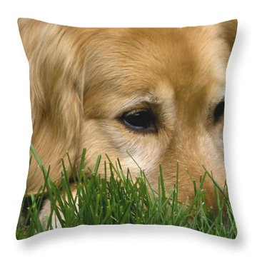 Daydreaming Throw Pillow by Rhonda McDougall