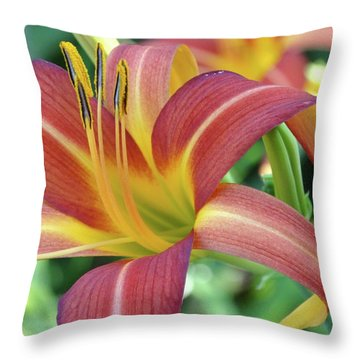 Daylilies At Daybreak Throw Pillow
