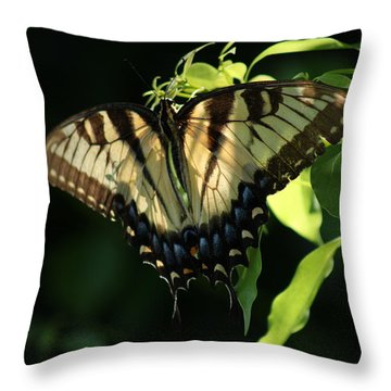 Dayspring Throw Pillow