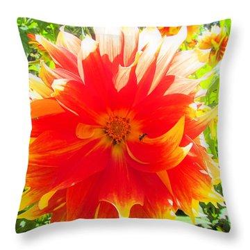 Dazzling Dahlia Throw Pillow by Elizabeth Dow