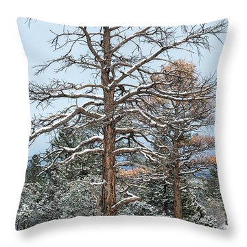 Dead Ponderosa Pines In Winter Throw Pillow