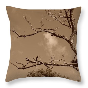 Throw Pillow featuring the photograph Dead Wood by Rob Hans