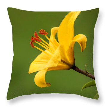 Throw Pillow featuring the photograph Dear Lily by Roy McPeak