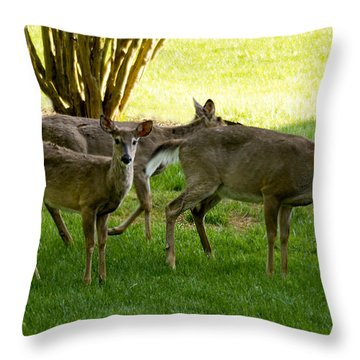 Throw Pillow featuring the photograph Dear Run by B Wayne Mullins