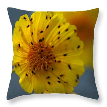 Death Valley Superbloom 102 Throw Pillow