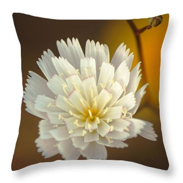 Death Valley Superbloom 203 Throw Pillow