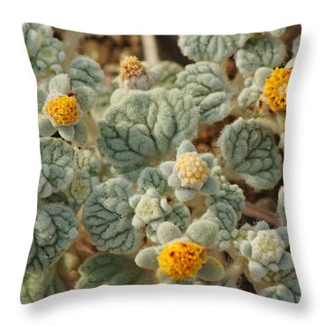 Death Valley Superbloom 302 Throw Pillow