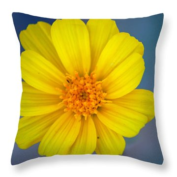 Death Valley Superbloom 403 Throw Pillow