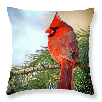 Throw Pillow featuring the photograph December's Cardinal by Rodney Campbell