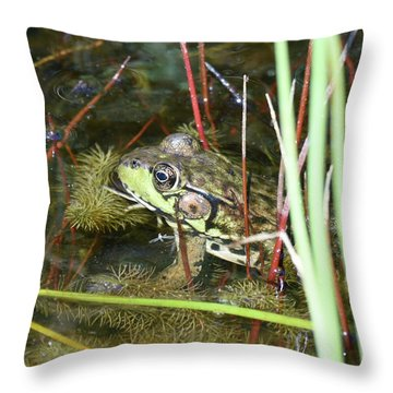 Throw Pillow featuring the photograph Decked Out For Christmas by Sally Sperry