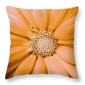 Decorative Closeness Throw Pillow