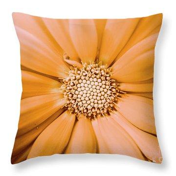 Decorative Closeness Throw Pillow