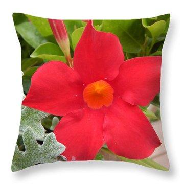 Mandevilla Deep Red Flower Throw Pillow