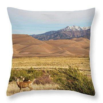 Throw Pillow featuring the photograph Deer And The Colorado Sand Dunes by James BO Insogna