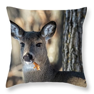 Throw Pillow featuring the photograph Deer At The Salad Bar by Paul Freidlund