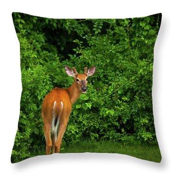 Deer Buck Throw Pillow