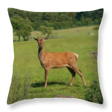 Deer Calf. Throw Pillow