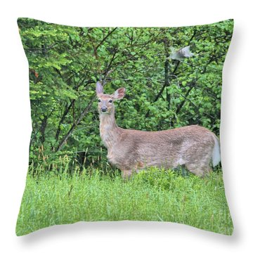 Deer Throw Pillow by Debbie Stahre
