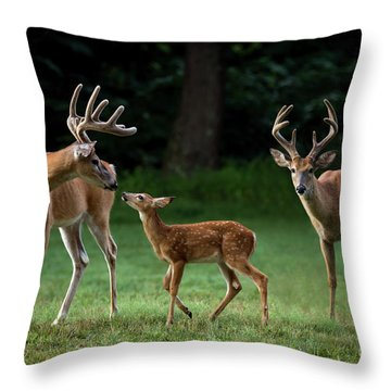 Throw Pillow featuring the photograph Deer Family Portrait by Andrea Silies