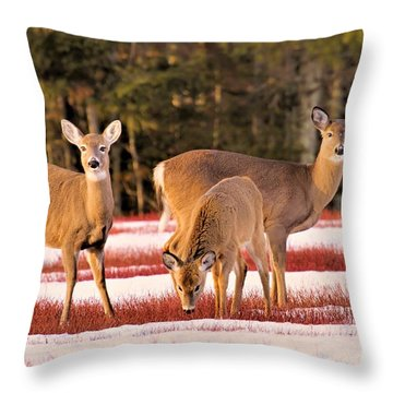 Deer In Snow Throw Pillow by Debbie Stahre