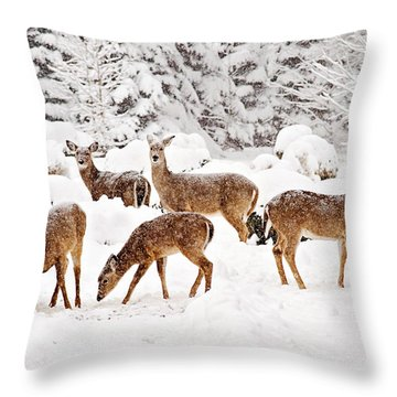 Throw Pillow featuring the photograph Deer In The Snow 2 by Angel Cher