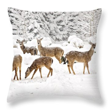 Throw Pillow featuring the photograph Deer In The Snow by Angel Cher
