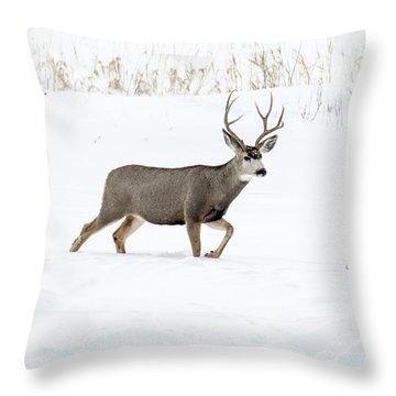 Throw Pillow featuring the photograph Deer In The Snow by Rebecca Margraf