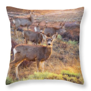 Throw Pillow featuring the photograph Deer In The Sunlight by Darren White