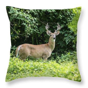 Eastern White Tail Deer Throw Pillow