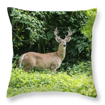 Eastern White Tail Deer Throw Pillow