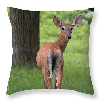 Deer Looking Back Throw Pillow