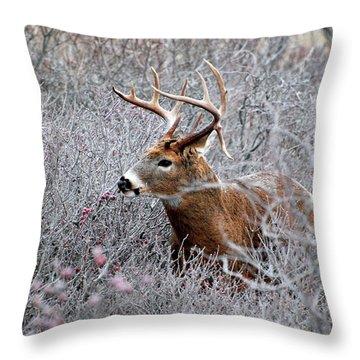 Deer On A Frosty Morning  Throw Pillow