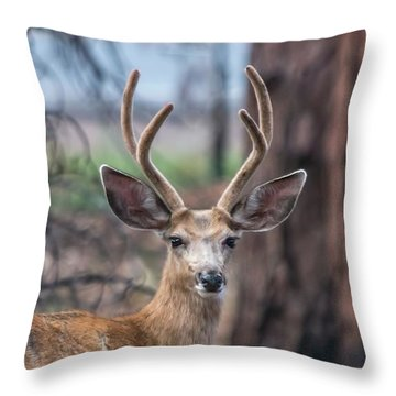 Deer Stare Throw Pillow
