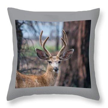 Deer Stare Throw Pillow