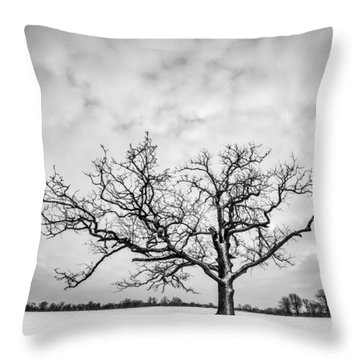 Throw Pillow featuring the photograph Delaware Park Winter Oak by Chris Bordeleau