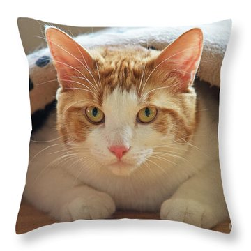 Throw Pillow featuring the photograph Delectable Companion.. by Nina Stavlund