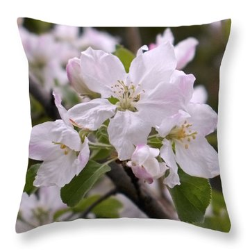 Delicate Apple Blossoms Throw Pillow by Rona Black